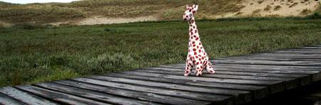 Die Giraffe auf Amrum